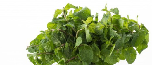 peppermint ( german michen )