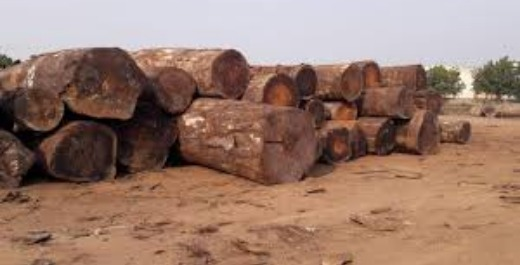 African hard wood timber and lumber logs ready for sale