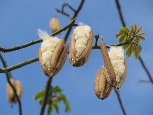 AVIDYA - Silk Cotton Knee Pillow