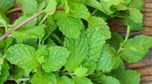 Peppermint , spearmint / crushed