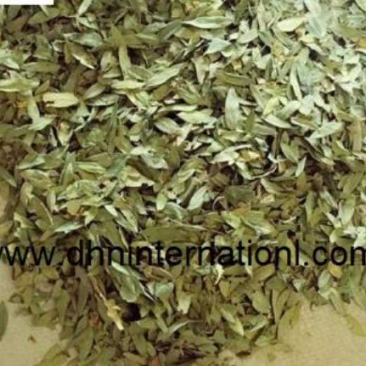 Good Quality senna leaves Pods & Extract For Pharmaceutical grade